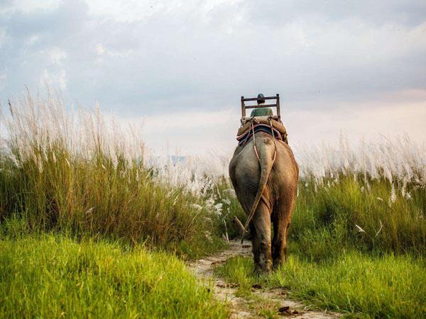 2020年尼泊尔洒红节十一日系列摄影创作,奇旺丛林探险、雪山日出盛景、洒红节色彩狂欢,纵览尼泊尔文化遗产