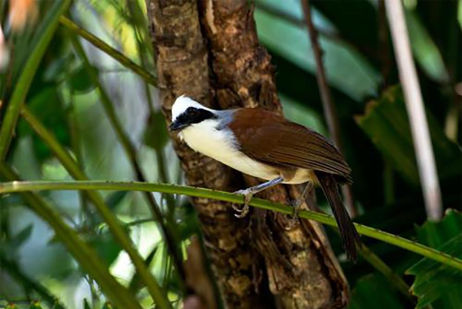 尼泊尔全境观鸟指南,850多种鸟类等你来